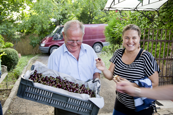 The vintner, Lajos, bringing out freshly picked cherries